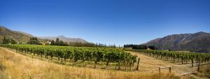 Image: CDT TP First Paddock FirstVines D3A8965 Pano Sm